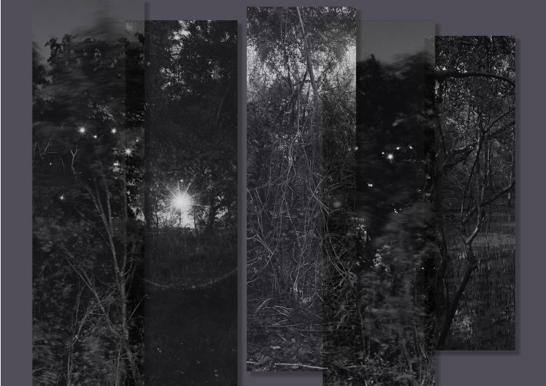 A Familiar Forest